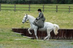 Tiny fence astride, mahoosive fence first time side saddle