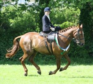 gallop on!