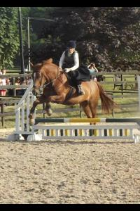 First sideways show jumping round
