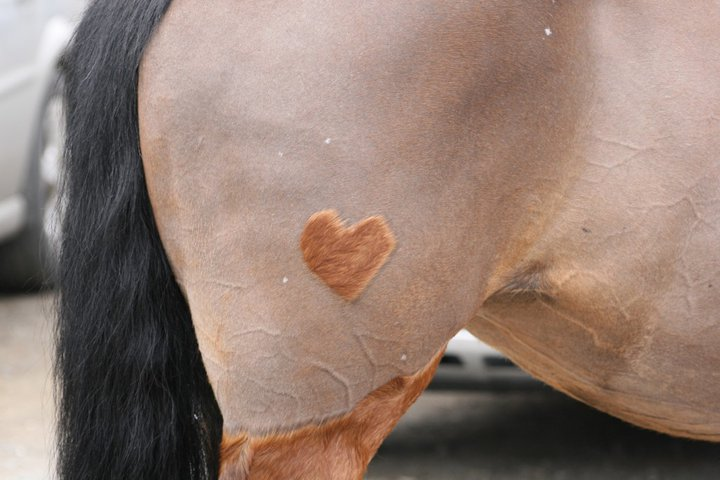 How To Clip A Horse Equestrian Reality