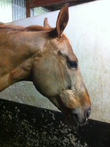 Another full clipped head.