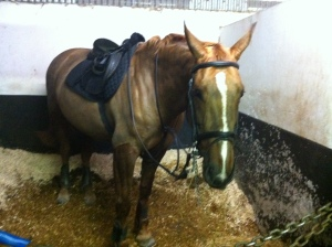 All clipped out. Photo by Lorna Keogh