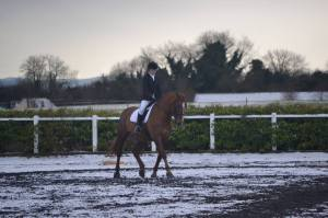 dressage in the snow
