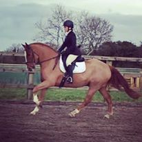 sammy-dressage
